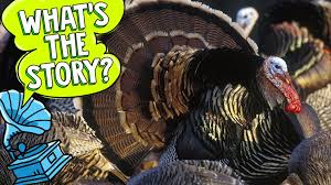 all about thanksgiving explore awesome activities facts
