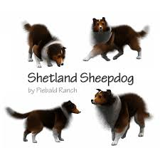 sims 3 australian shepherd template dog templates csc only daruma fields saddlery