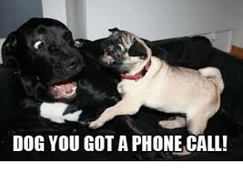 Dog Phone Meme - dog you got a phone call meme on sizzle