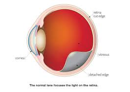 What Structure Of The Eye Focuses Light On The Retina Services Omni Surgery