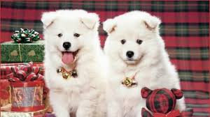 Cute Dogs Wallpapers by Cute Dogs Images Qige87 Com