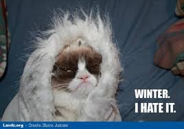 Winter Meme - grumpy cat meme winter i hate it jpg