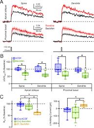 gabab receptor modulation of voltage sensitive calcium channels in