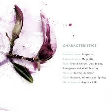 the language of flowers magnolia magnolia and language