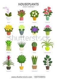 popular house plants common house plants images u2013 hviezda club