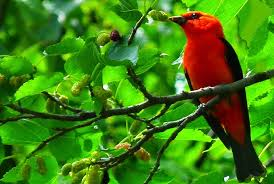 photography what makes these bird s photos beautiful 1