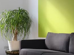 colour scheme lime for the living room the idealist