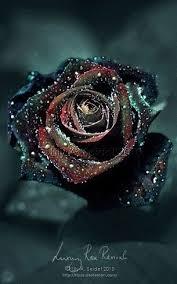 Black Rose Flower 19 Sophisticated Black Flowers For Your Unique Garden Black