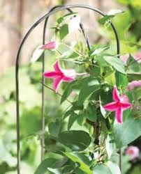 Climbing Plant Supports - garden hoops plant support is perfect for twining climbing plants