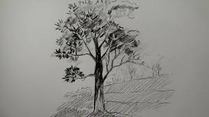 how to draw a tree using pencil a simple tree