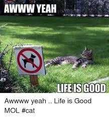 Awww Yeah Meme - awww yeah life is go0d awwww yeah life is good mol cat life