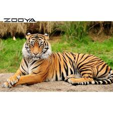 Point Defiance Zoo Lights Coupon by Online Get Cheap Ground Paper Aliexpress Com Alibaba Group