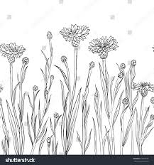 spring summer themes black contour cornflowers stock vector