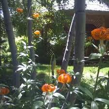 tahoe tree company 16 photos 11 reviews nurseries