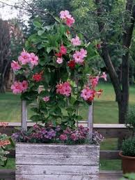 heat loving plants 357 best container gardening images on pinterest container plants