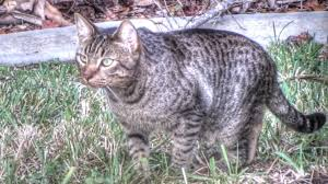 feral cat documentary youtube