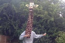 Giraffe Hat Meme - have you ever seen a giraffe sing let s get it on by marvin gaye