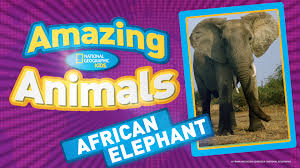 kids help elephants