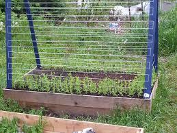 28 best gardening tomatillos images on pinterest gardening