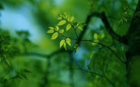 green tree wallpapers top 45 green tree pictures original high