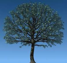 dp tree tool
