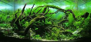 Planted Aquarium Aquascaping Aquascaping Wikipedia