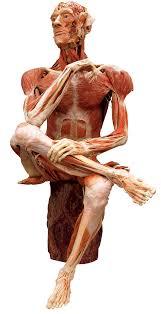 Anatomy The Human Body Menschen Museum U2013 Memu U2013 Menschen Museum Berlin