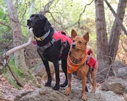 webmaster ruffwear webmaster pro robinventures robin modeling his webmaster pro next to xena hikinggirlwithdog on instagram in her standard webmaster notice the handles are similar in size