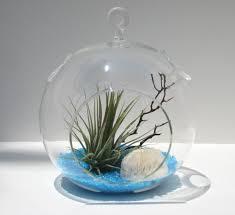 create a unique air plant terrarium u2013 fresh design pedia