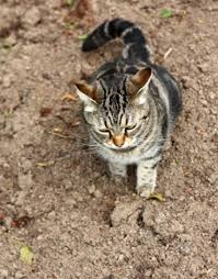 Keep Cats In Backyard Keeping Cats Off Vegetable Beds