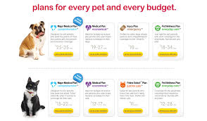 home insurance quote woolworths quote pet insurance raipurnews