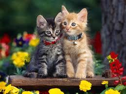 beautiful kittens beautiful kittens pixdaus
