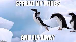 Penguin Meme - flying penguin meme generator imgflip