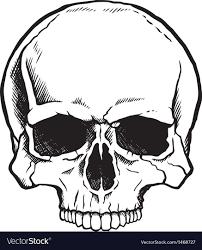black and white human skull royalty free vector image