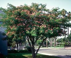 Best Trees For Backyard by 35 Best Trees For Property Images On Pinterest Fast Growing