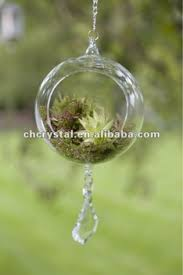 hanging glass globe air plant terrarium bauble hanging glass