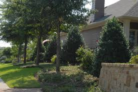 great screening shrubs for north texas when privacy matters