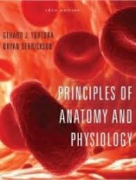 Hole Anatomy And Physiology 13th Edition Free Download Essentials Of Human Anatomy U0026 Physiology 10th