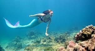 meet the scottish real life mermaid sunday post