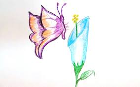 butterfly on flower drawings with color drawing of sketch
