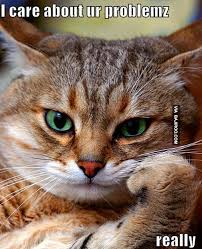 Cat Problems Meme - funny cat cares about problems meme 29 funny cats in the world