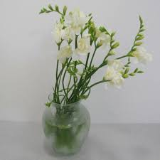 Bulk Wedding Flowers Processing Bulk Wedding Freesia Free Flower Tutorial
