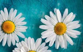 turquoise flowers turquoise background flower 41 wallpapers hd wallpapers