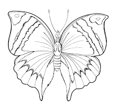 butterflies and insects coloring pages 25 butterflies and