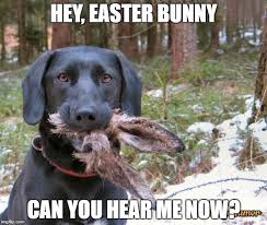 Funny Rabbit Memes - image tagged in easter dead rabbit funny easter imgflip