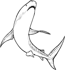 great white shark coloring page animals town animals color an