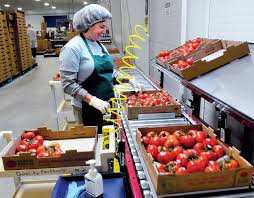 Backyard Farms Madison Grower Backyard Farms Resumes Tomato Production After