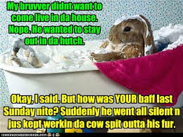 Funny Memes Clean - animal capshunz clean funny animal pictures with captions