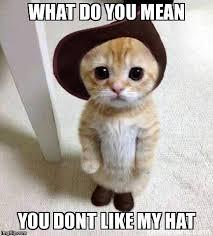 Mean Cat Memes - cute cat imgflip