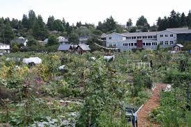 South Seattle Community College Picardo Farm Wikipedia
